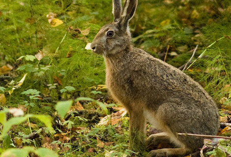 Rabbit & Small Game Snaring